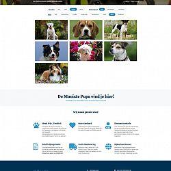 Meerle Dogs: afbeelding 2